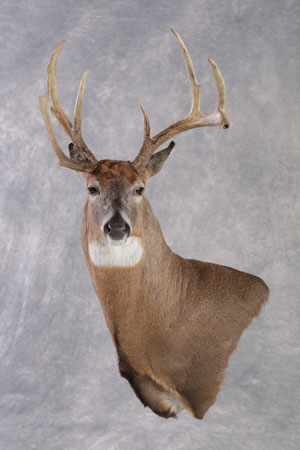 2020 State Taxidermy Competition